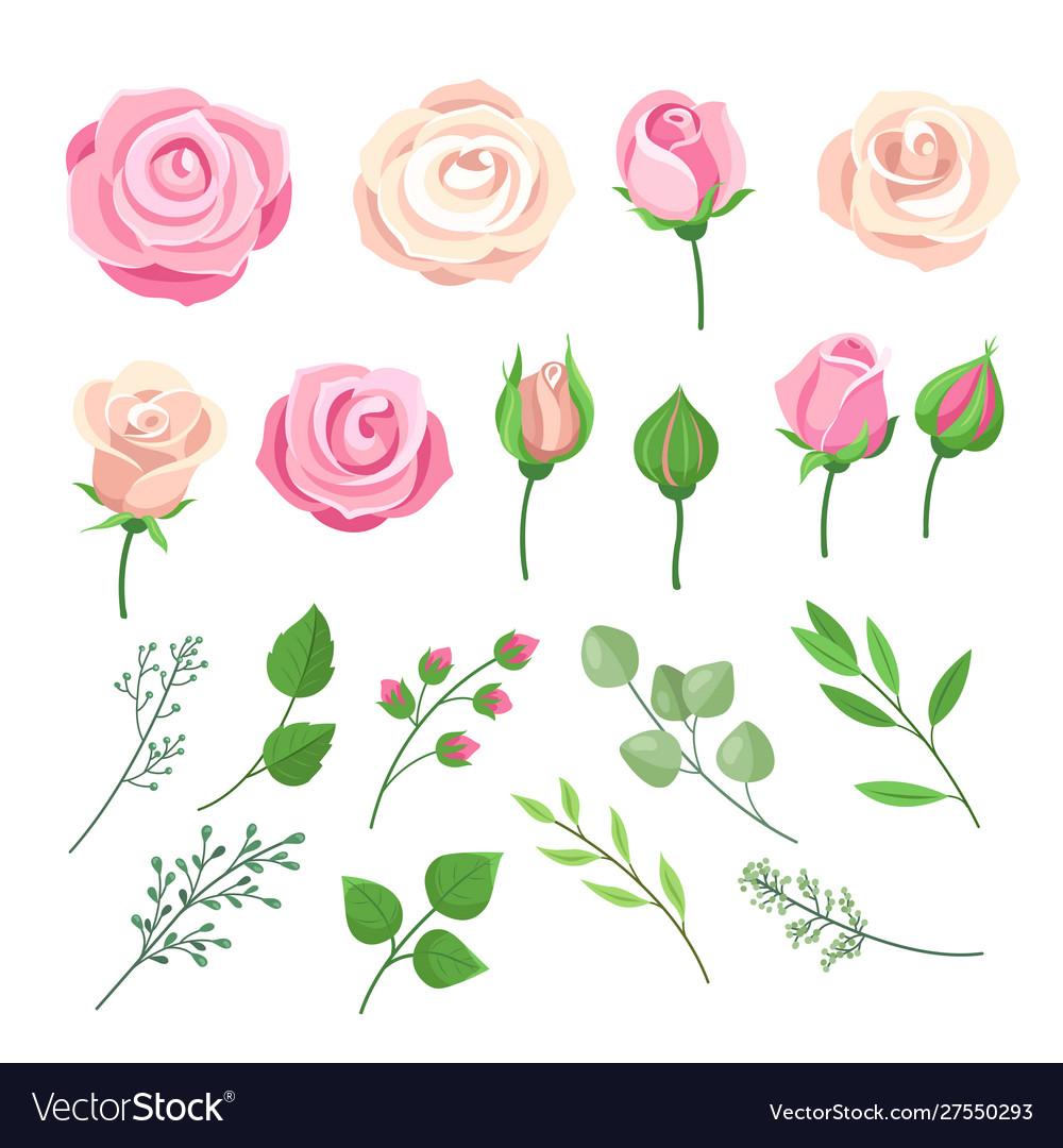 Rose elements pink and white roses flowers