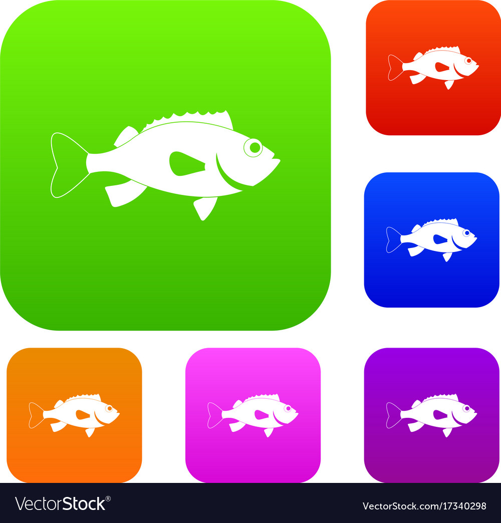 Sea bass fish set color collection Royalty Free Vector Image