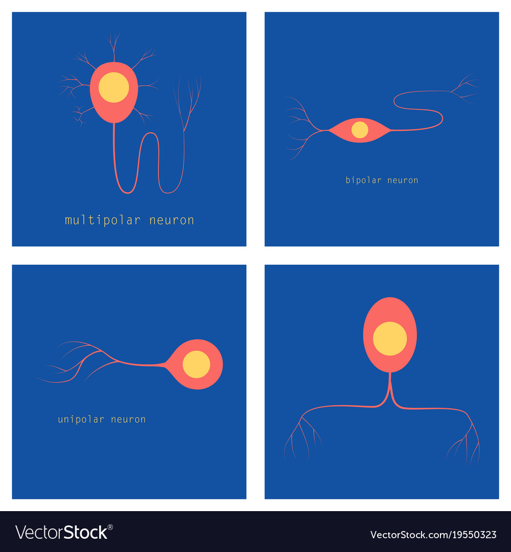Set of structure of a motor neuron royalty free vector image set of structure of a motor neuron vector image ccuart Gallery