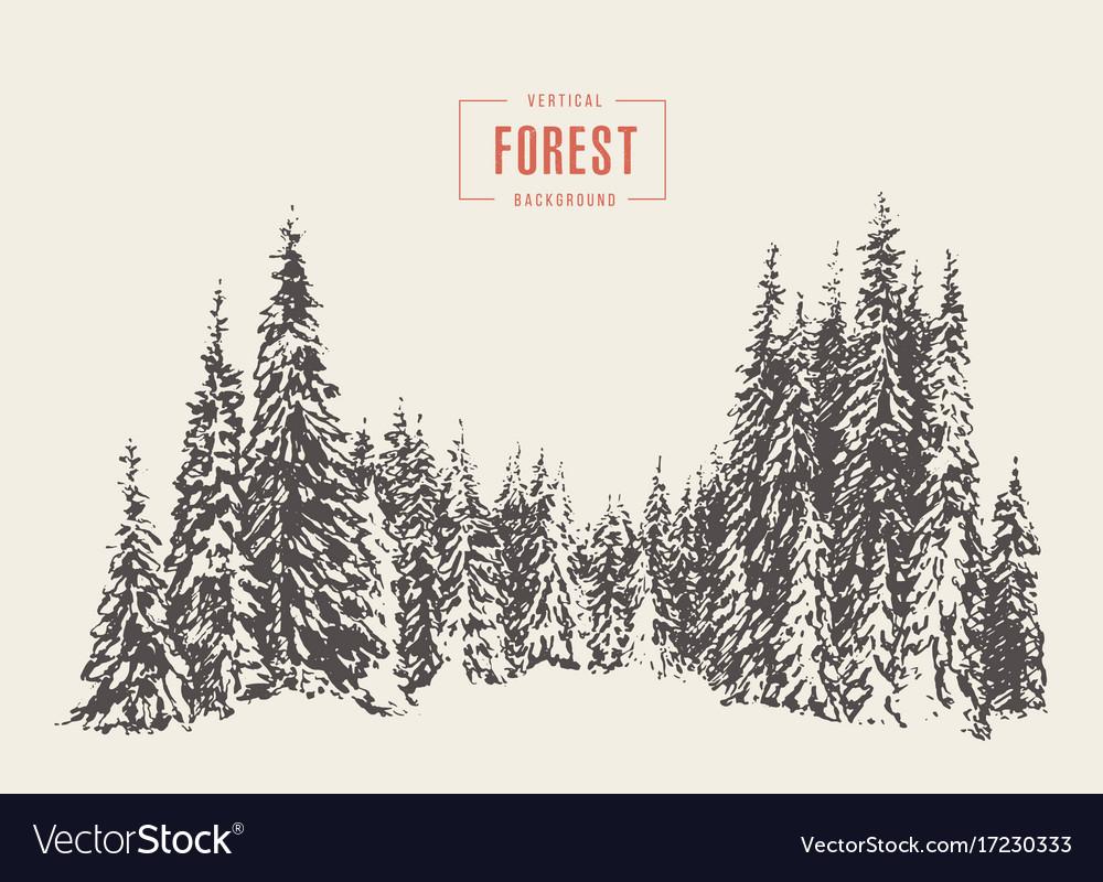 Pine forest hand drawn sketch