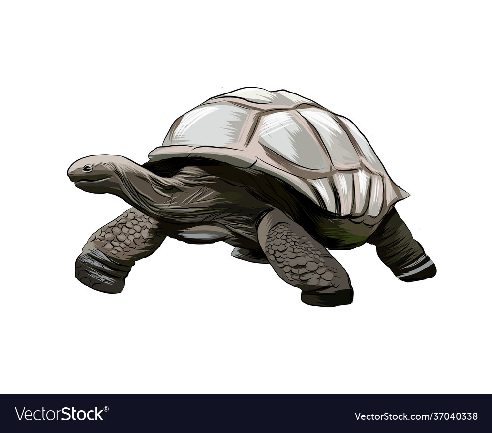 Galapagos turtle from a splash watercolor