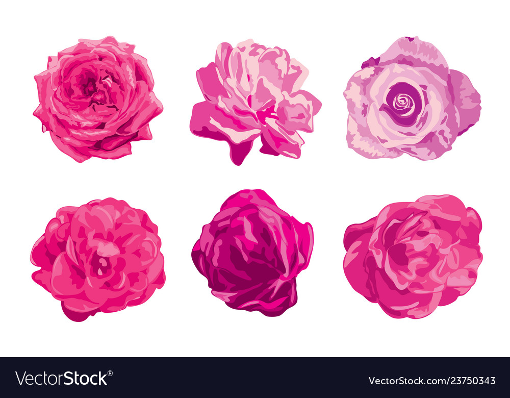 Rose flowers set