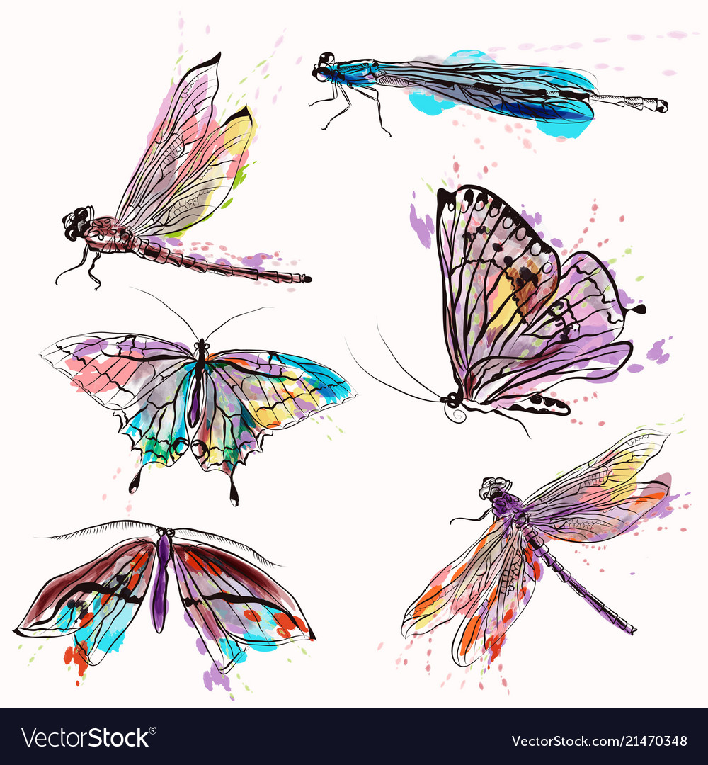 Set of detailed butterflies for design
