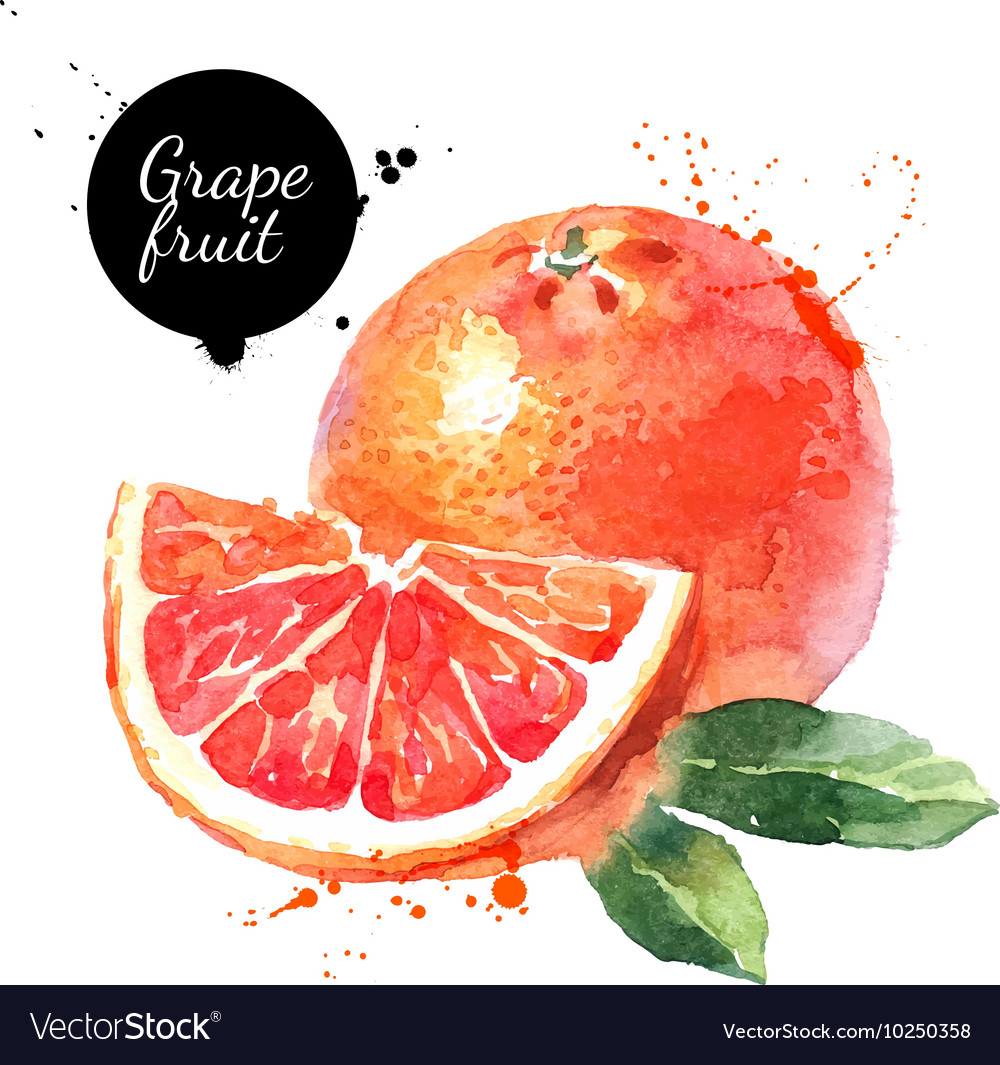 Watercolor hand drawn pink grapefruits Isolated