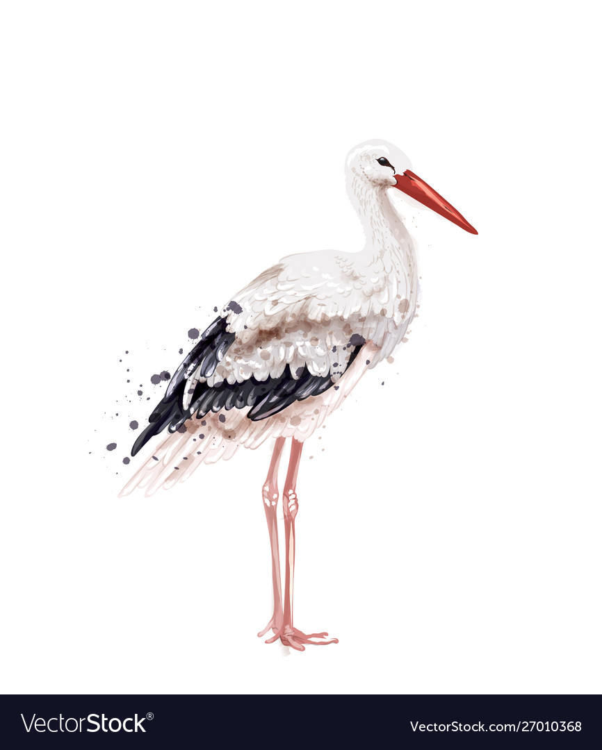Stork watercolor isolated on white icon painted