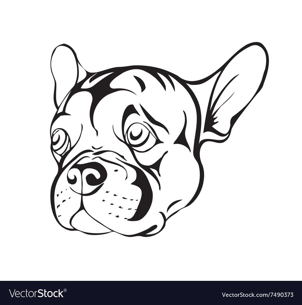 Sad french bulldog
