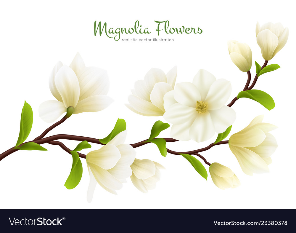 Realistic White Magnolia Flower Composition