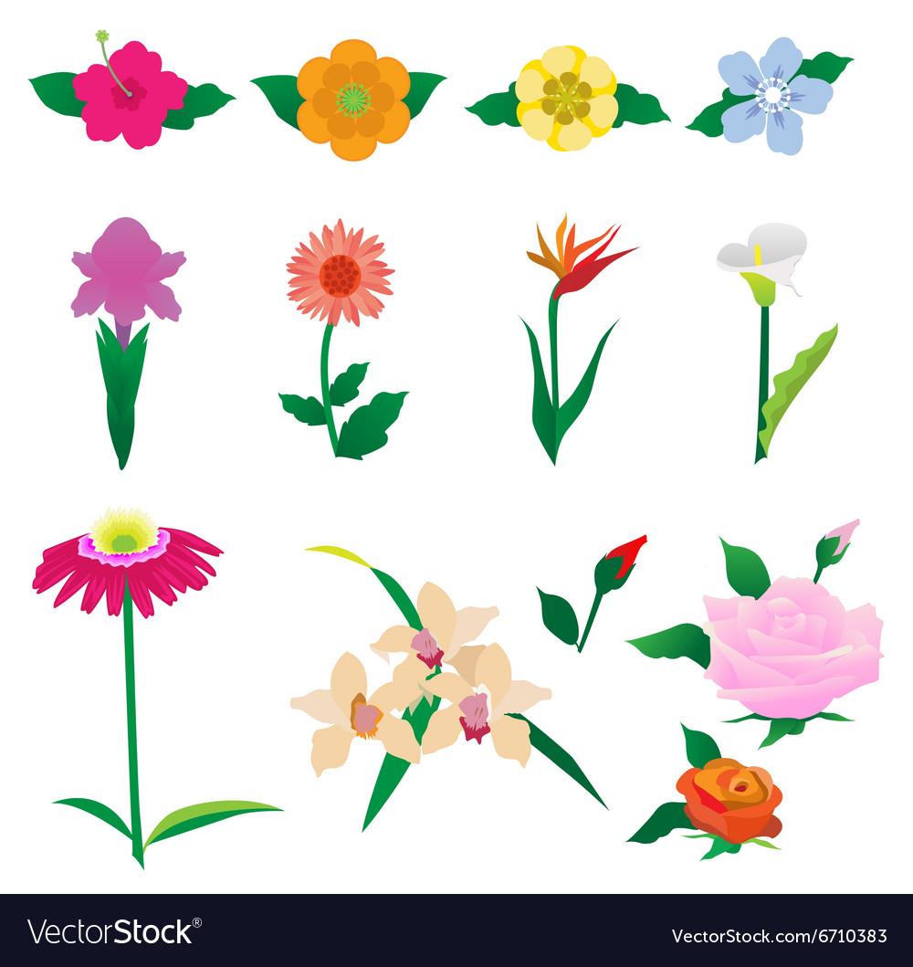 Beautiful colorful flowers