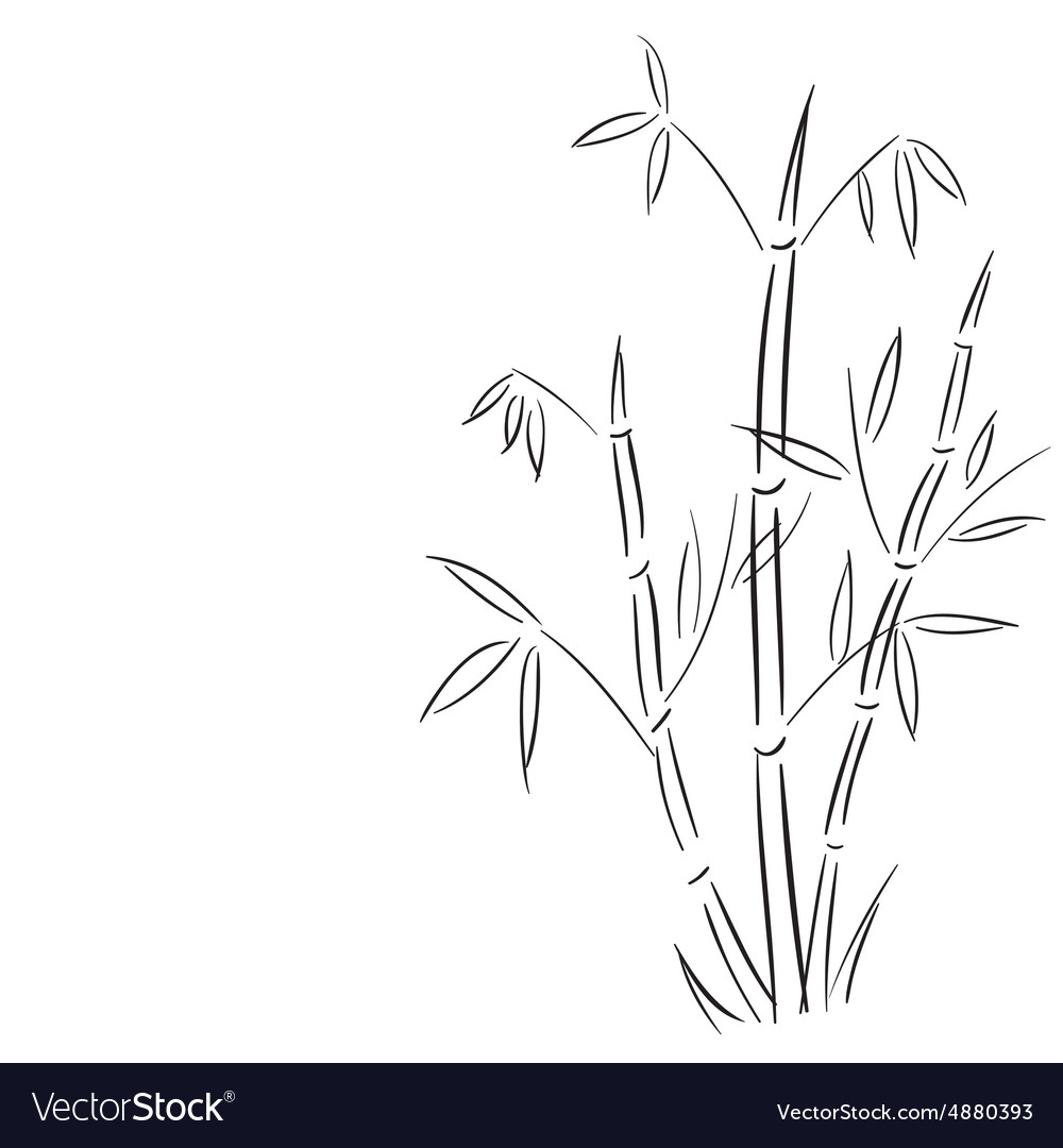 Bamboo branches hand drawn vector image