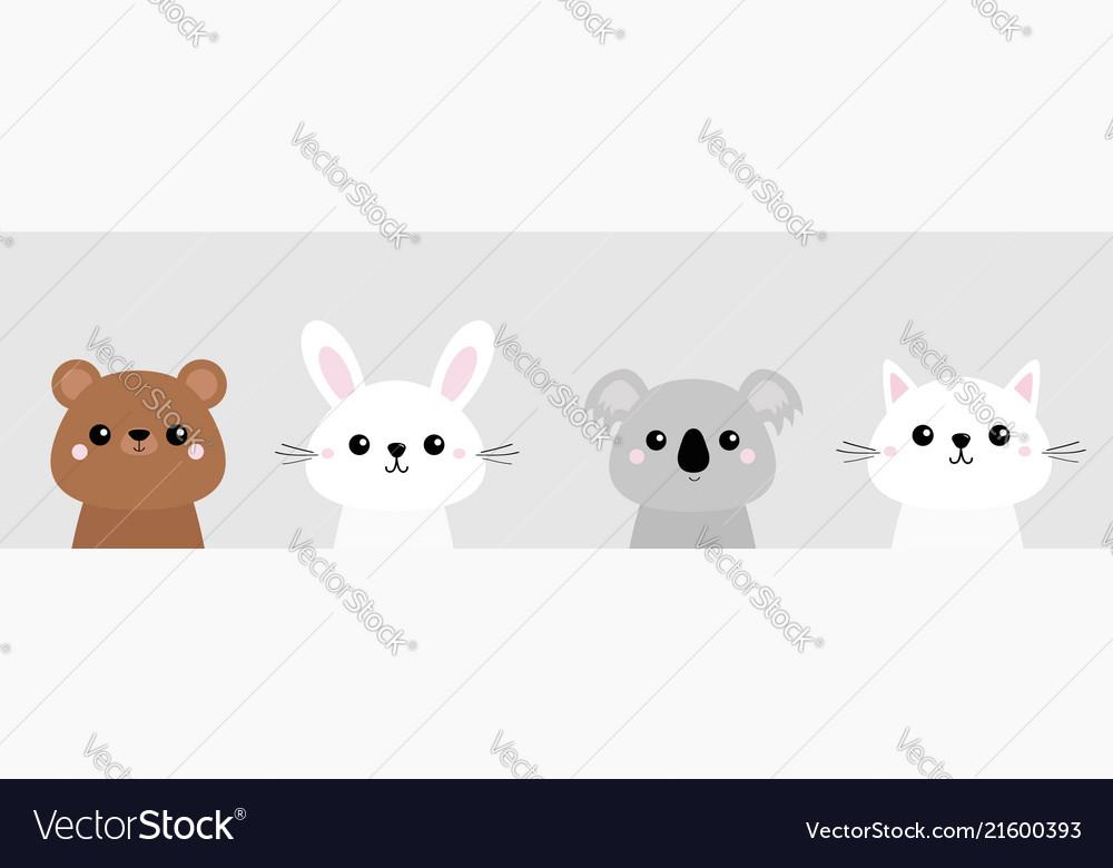 Cat kitten bear rabbit hare grizzly koala