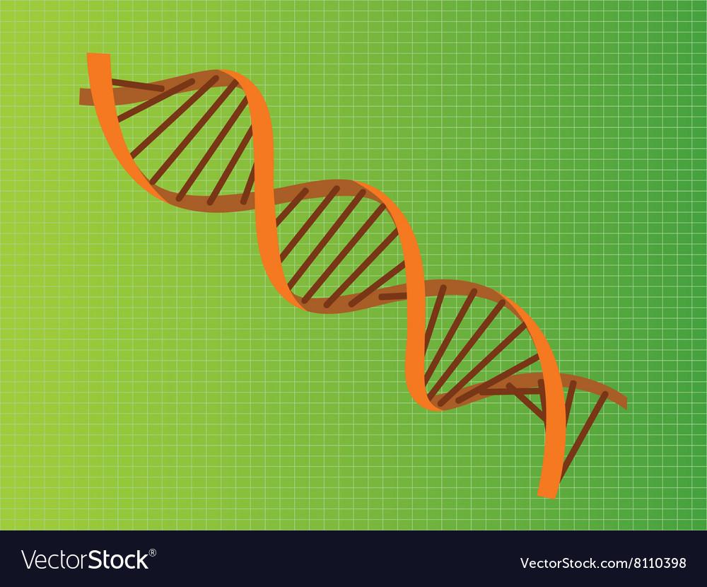 Dna strand orange vector image