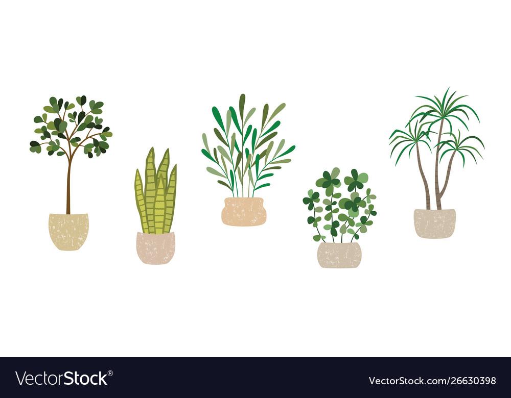Set house indoor plants potted plants
