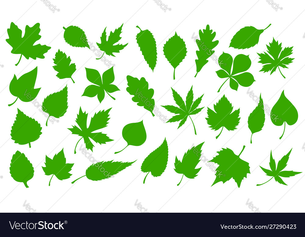 Green leaves nature tree leaf icons