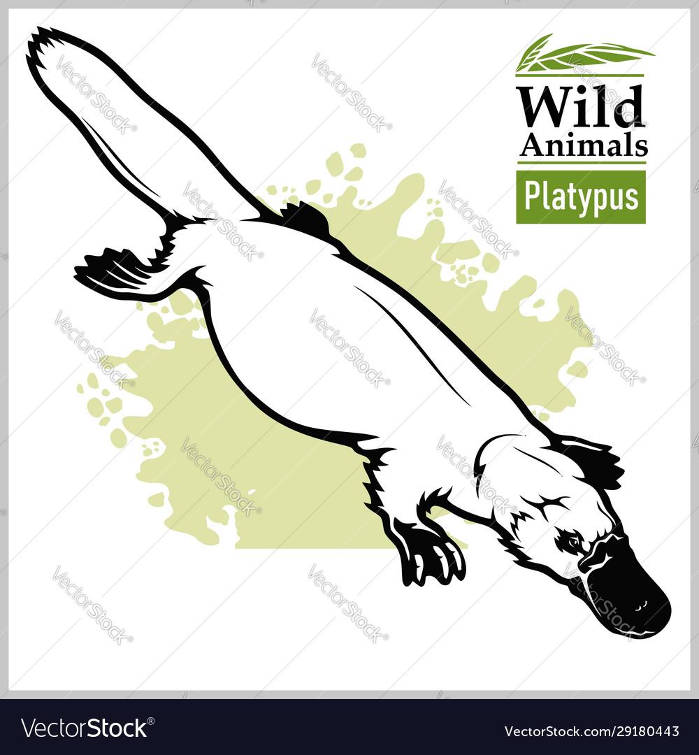 Platypus or duckbill animals australia series