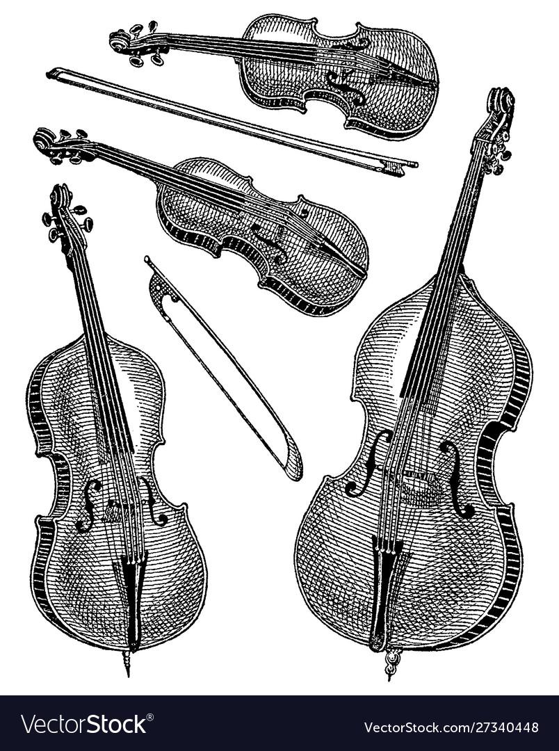 Vintage engraving violins
