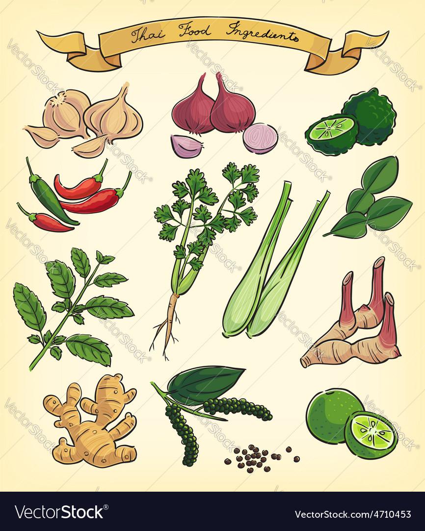 Hand drawn thai food ingredients