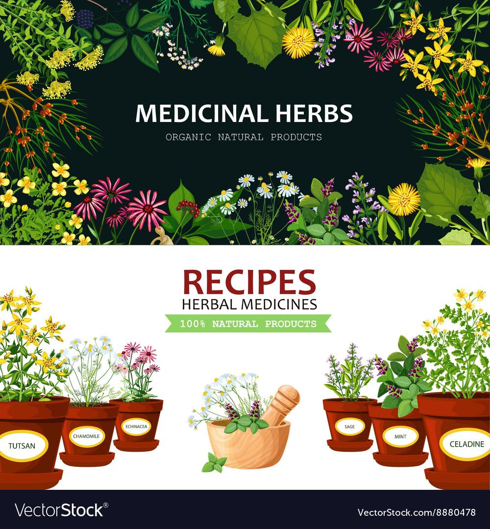 Medicinal Herbs Banners Royalty Free Vector Image