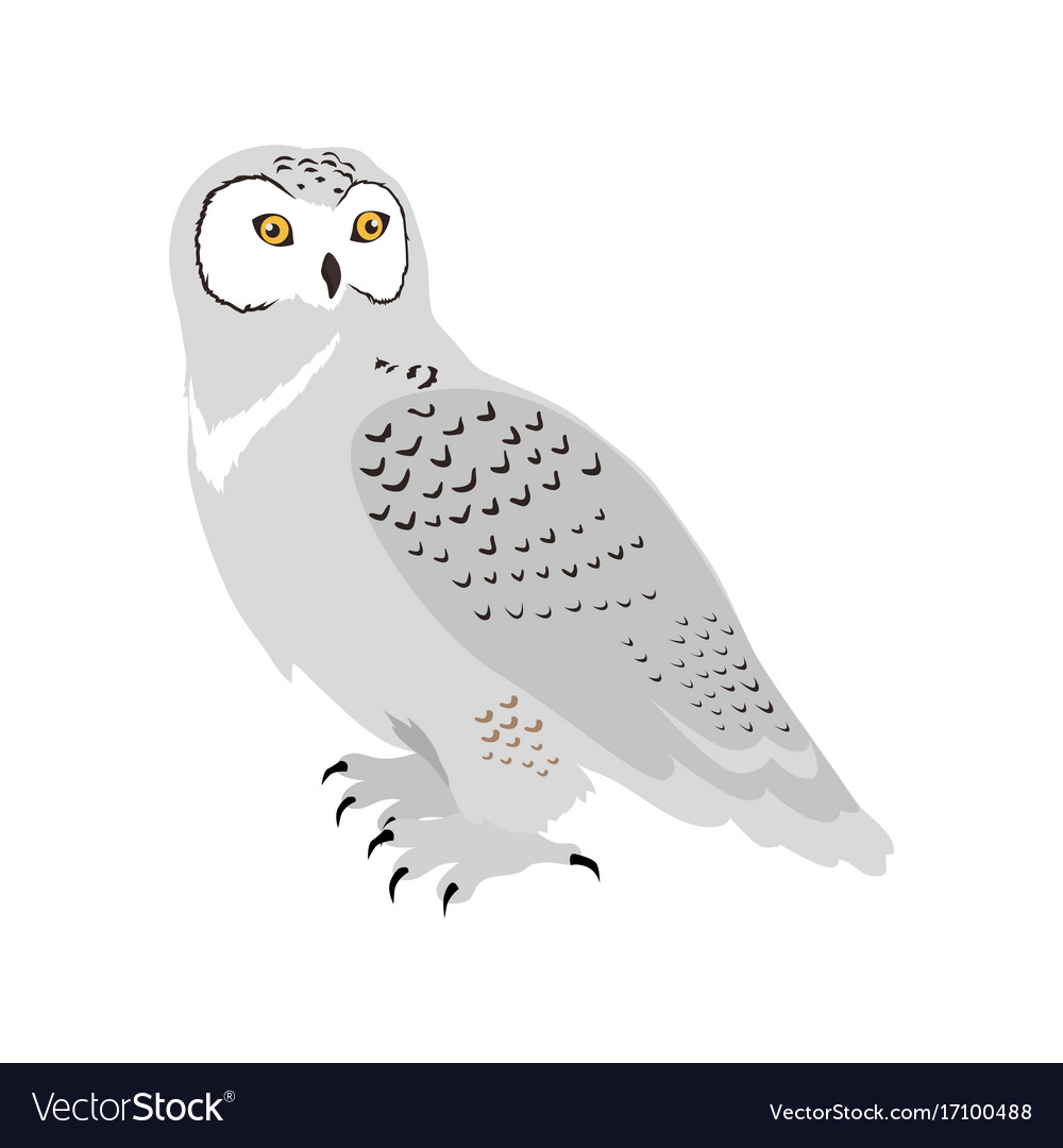 snowy owl flat design royalty free vector image