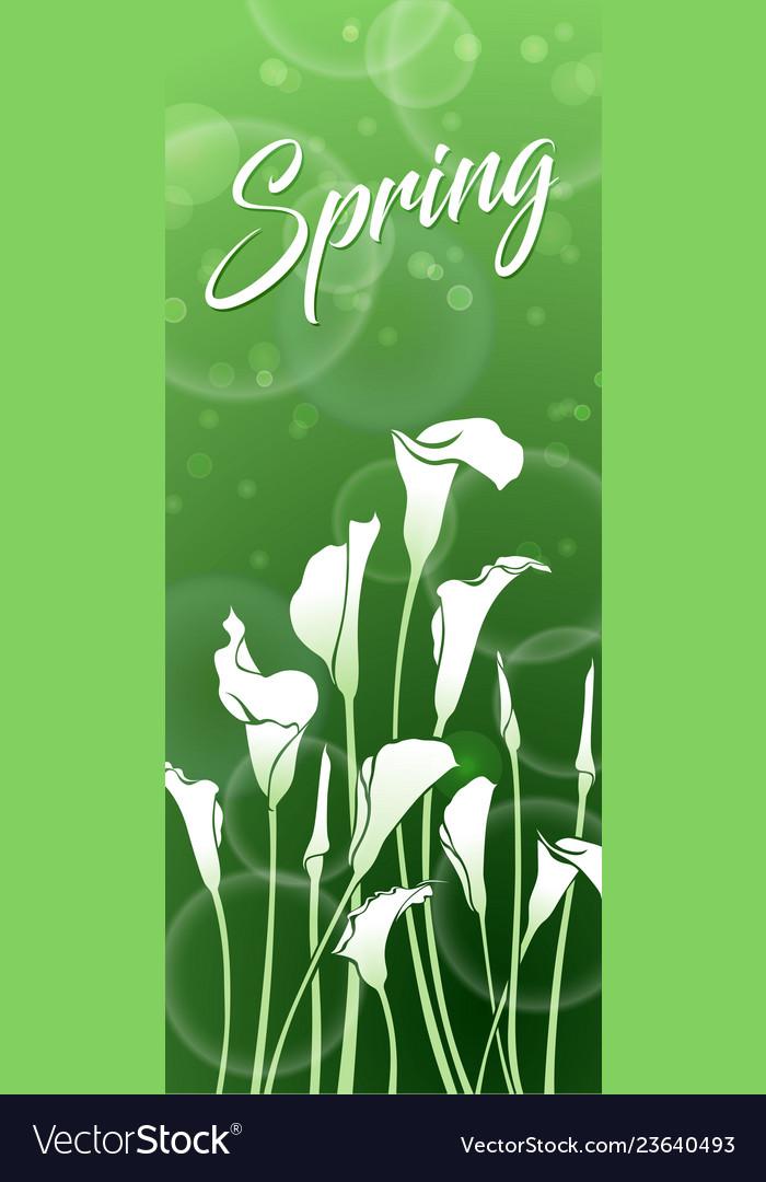 White callas green spring picture