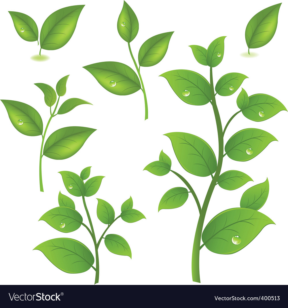 Leaf branches vector image