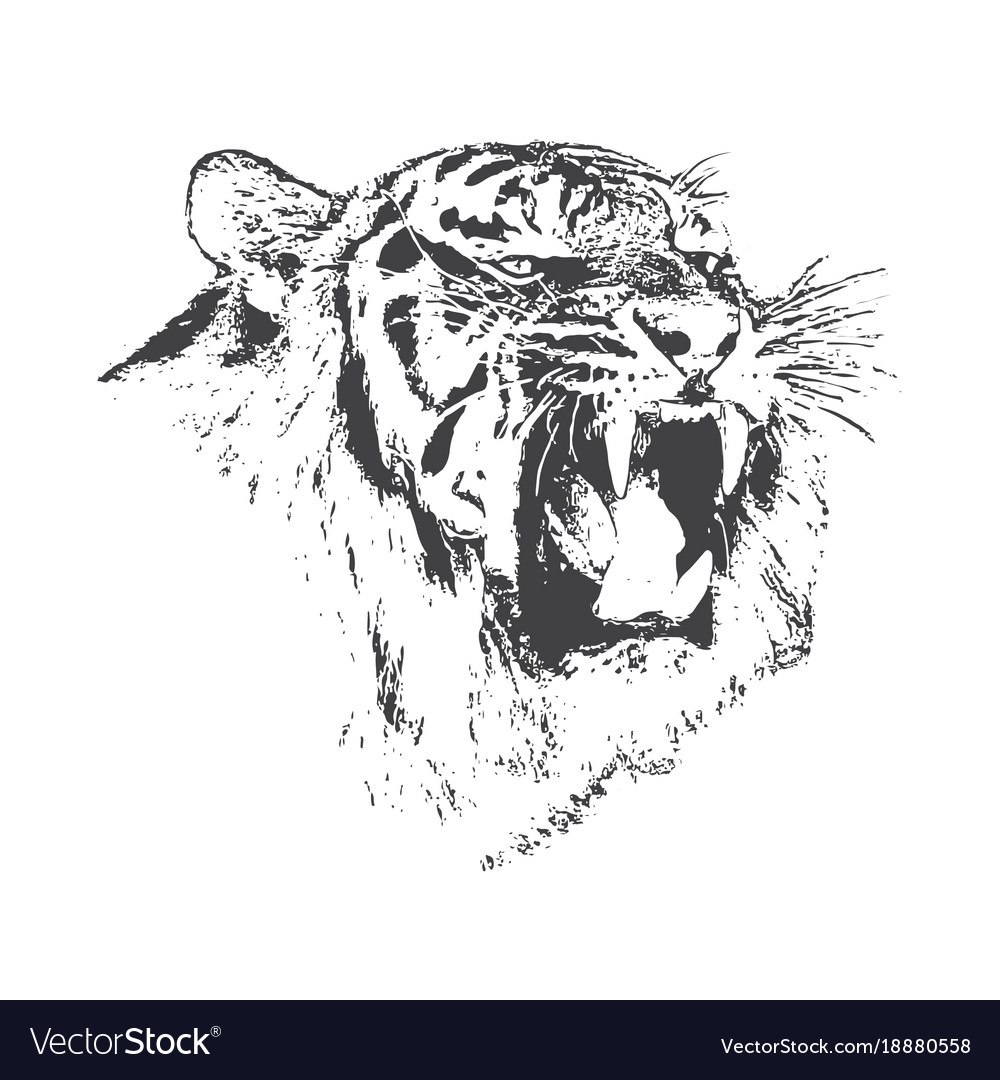Angry tiger is growling