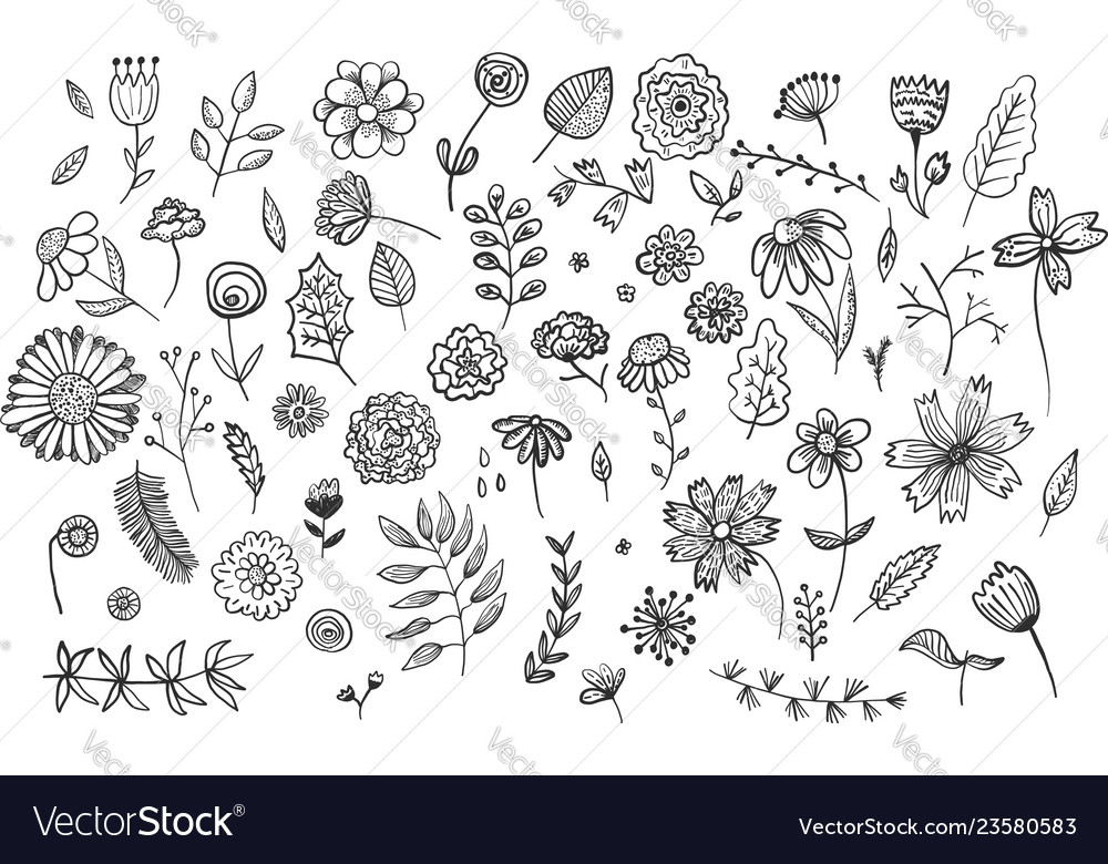 Set of cute hand drawn ink flowers and herbs