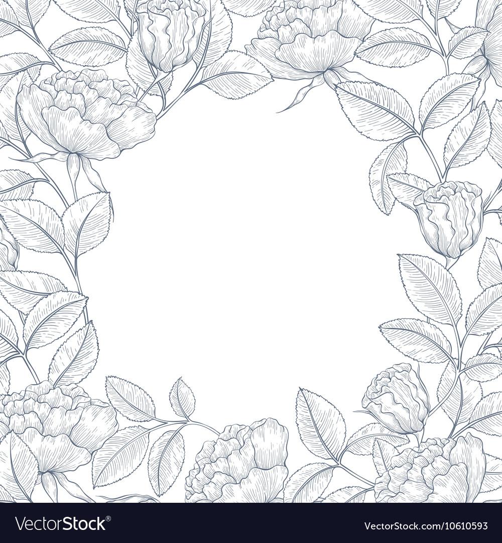 Decorative english garden rose