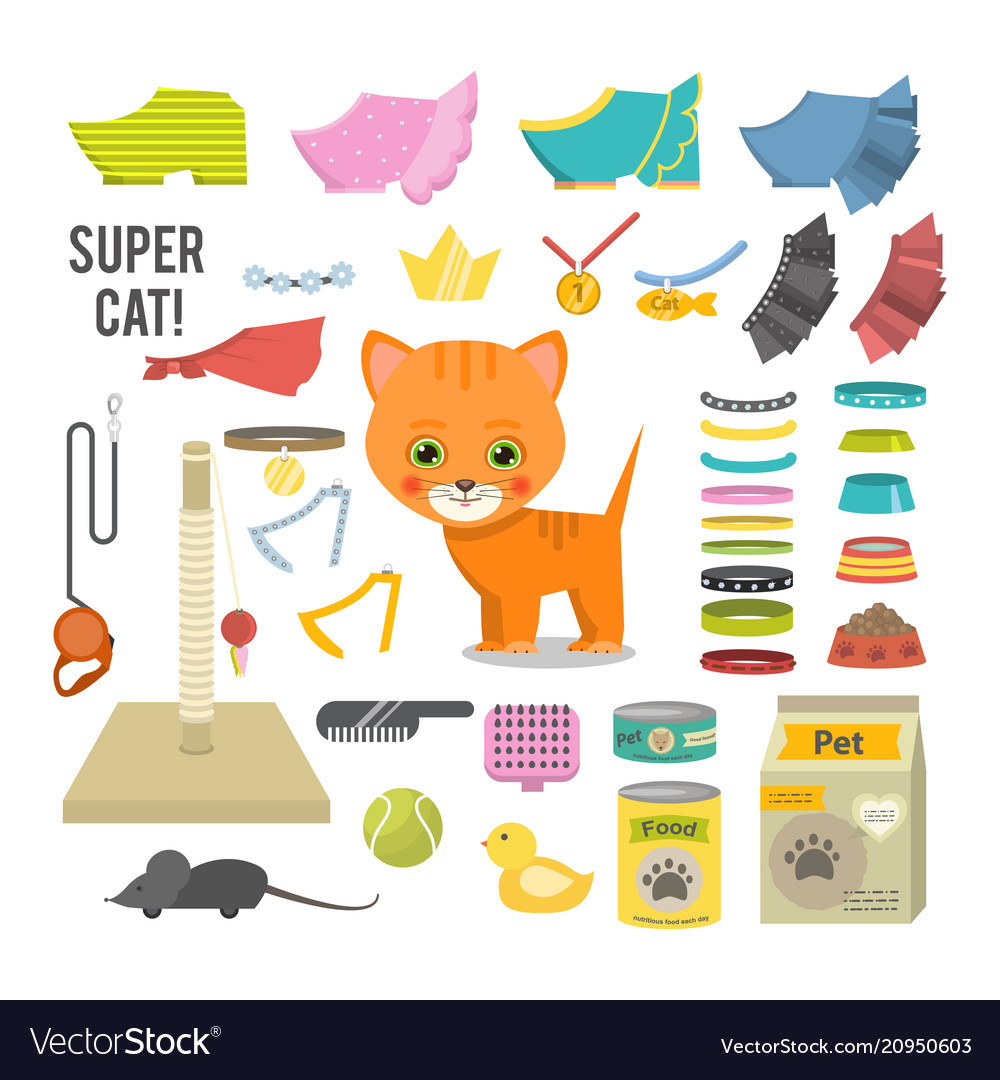 Cat and accessories