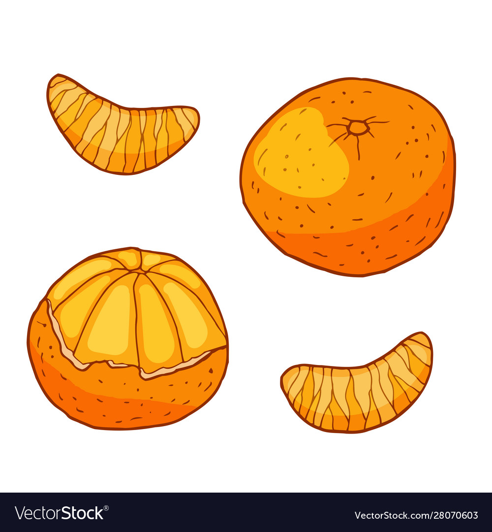 Tangerine with slices hand drawn