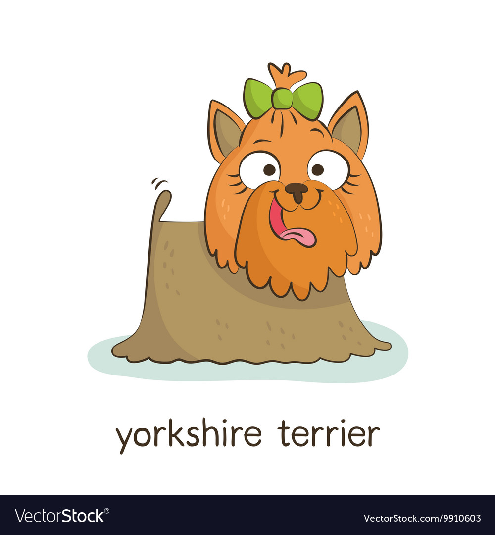 Yorkshire terrier Dog character isolated on white vector image