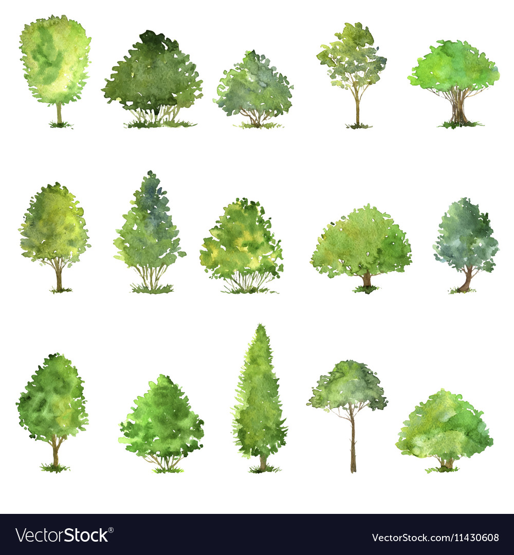 Set of trees drawing by watercolor Royalty Free Vector Image