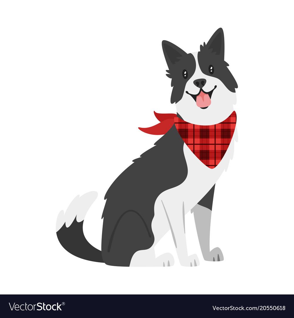 Farm animal - dog