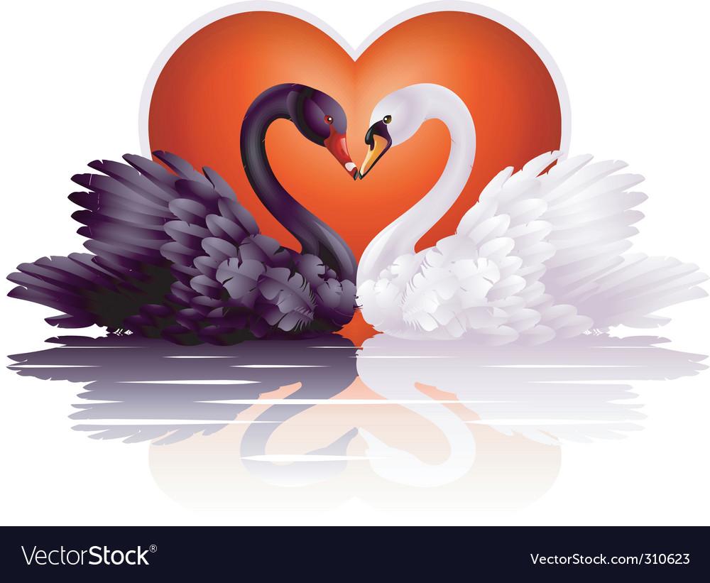 Graceful swans vector image