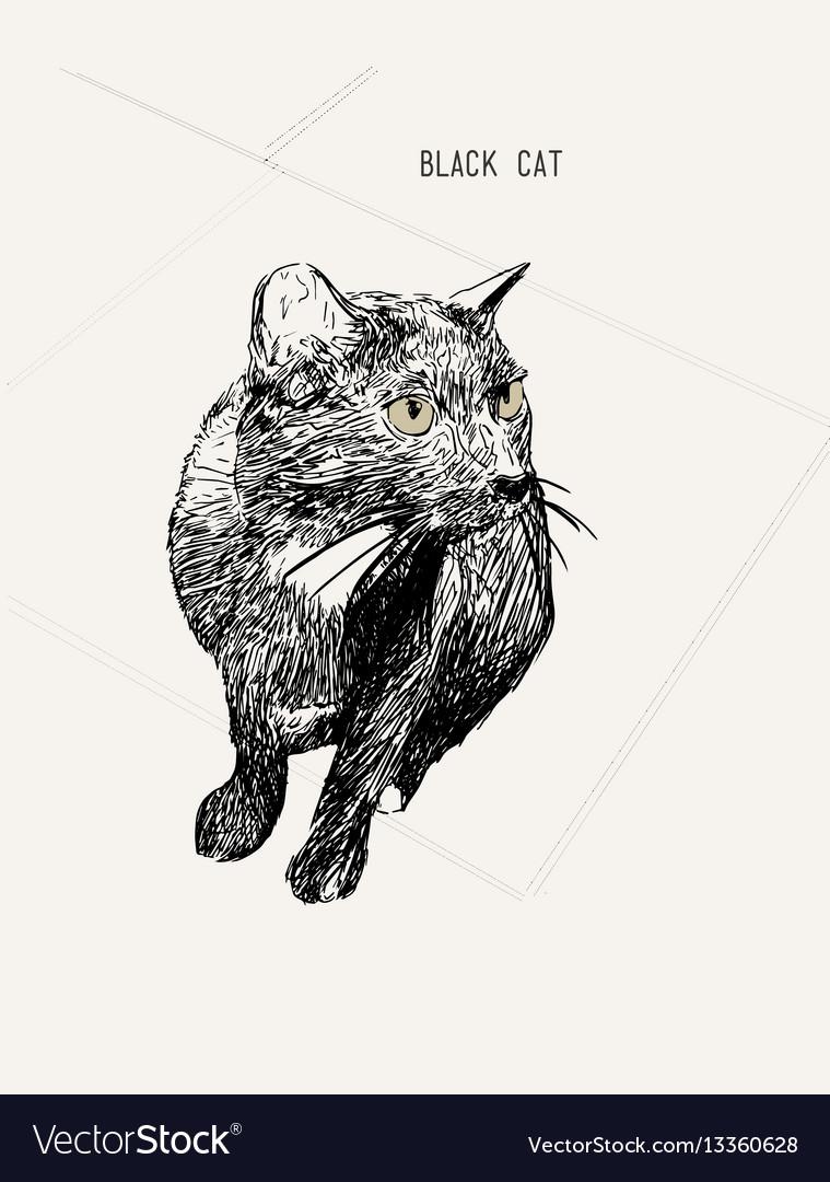 Black cat sitting hand drawn sketch line art