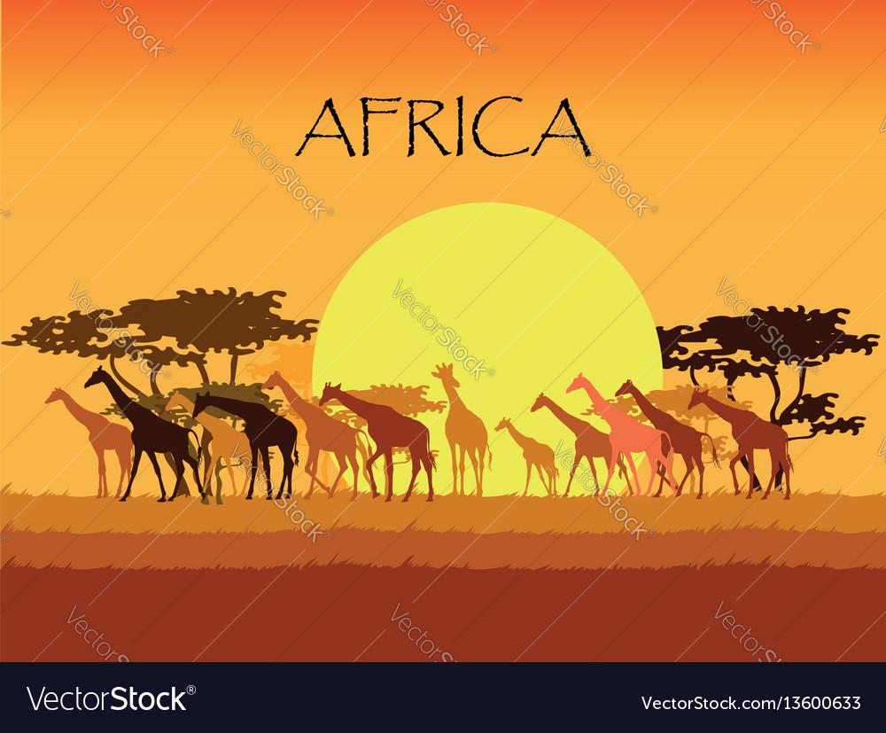 Giraffes silhouettes in savannah