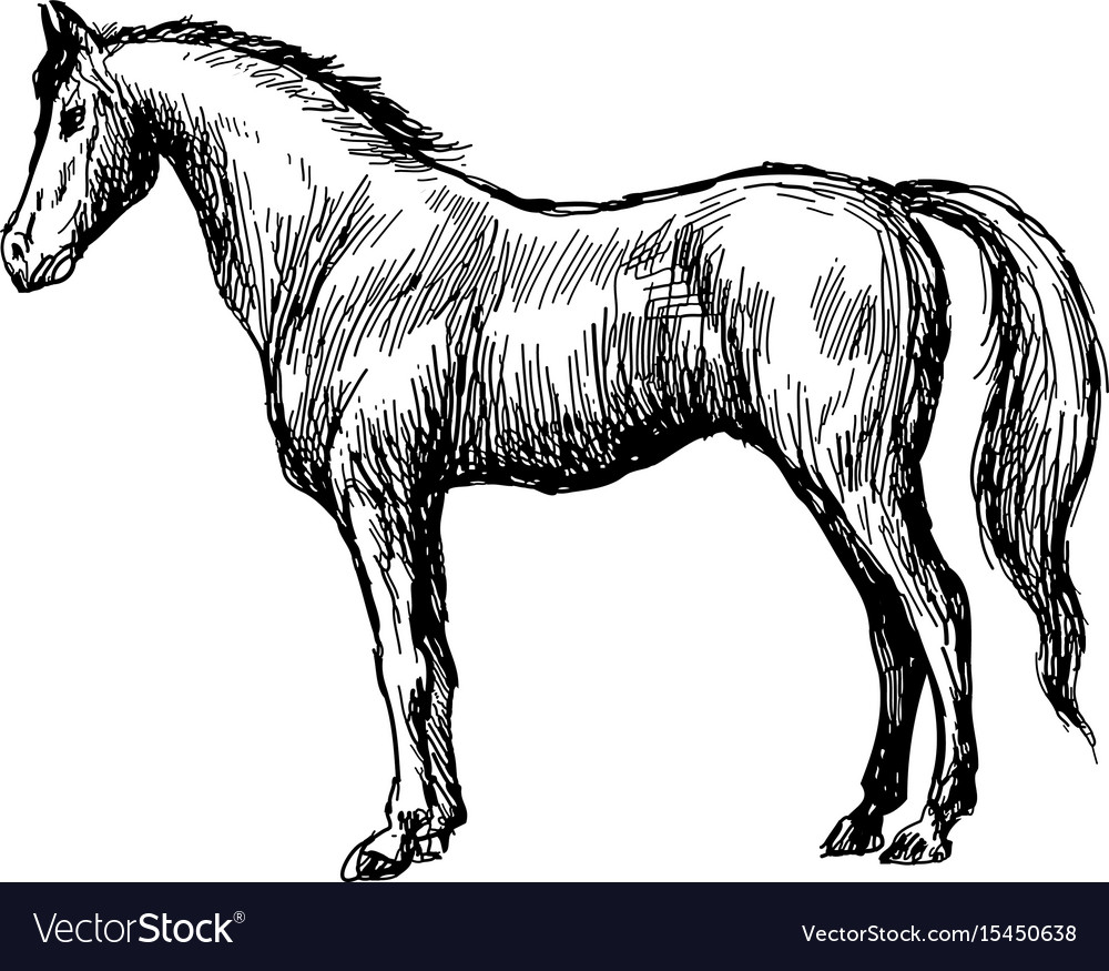 Freehand sketch of horse