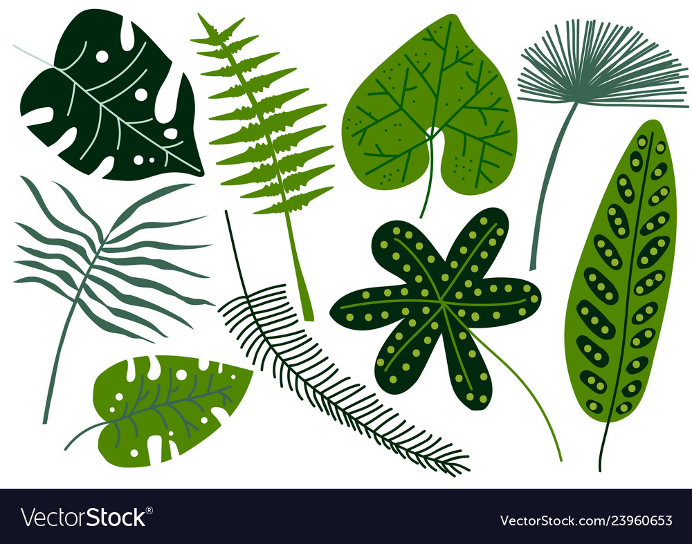 Collection of tropical leaves exotic jungle palm