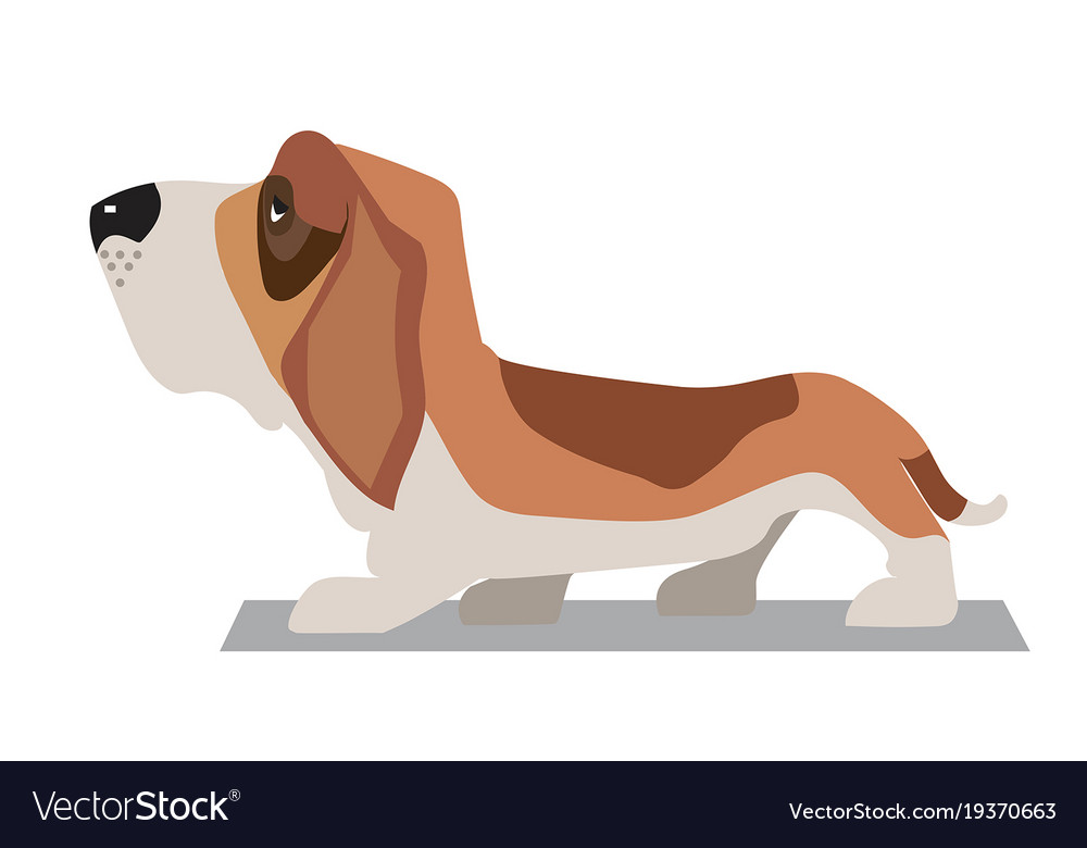 Basset-hound minimalist image