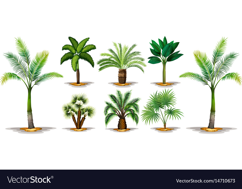 Different types of palm trees vector image