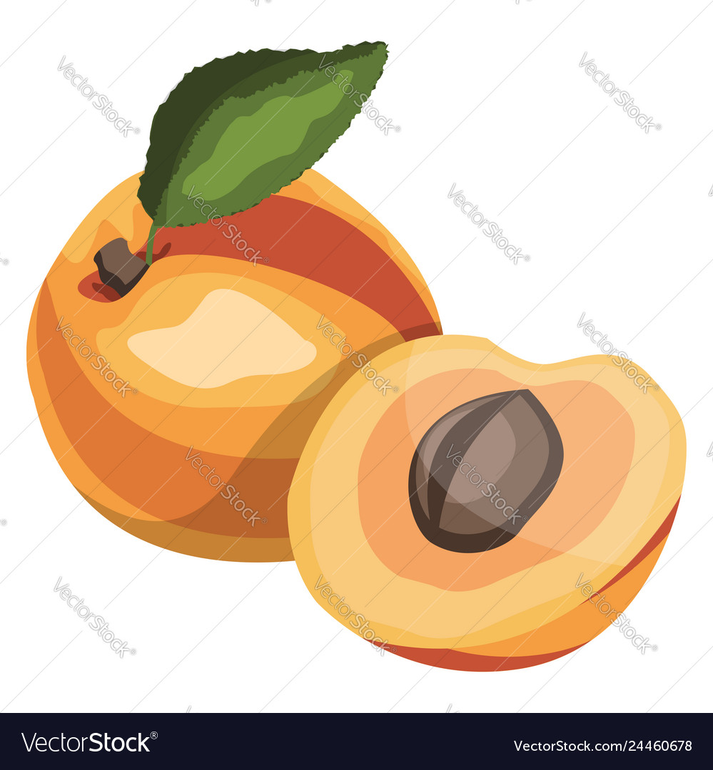 Apricot with green leaf cartoon fruit on white