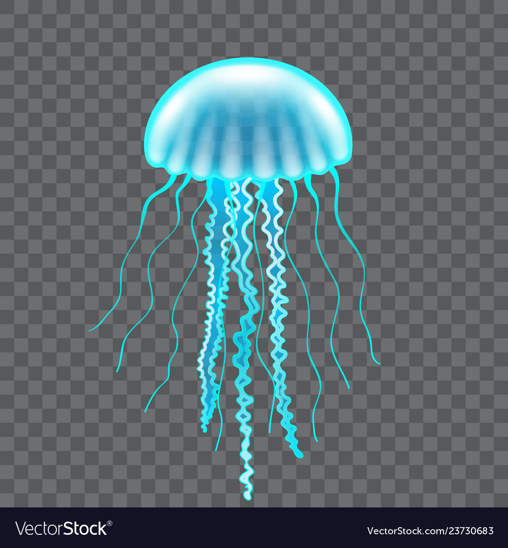 Beautiful jellyfish isolated on dark