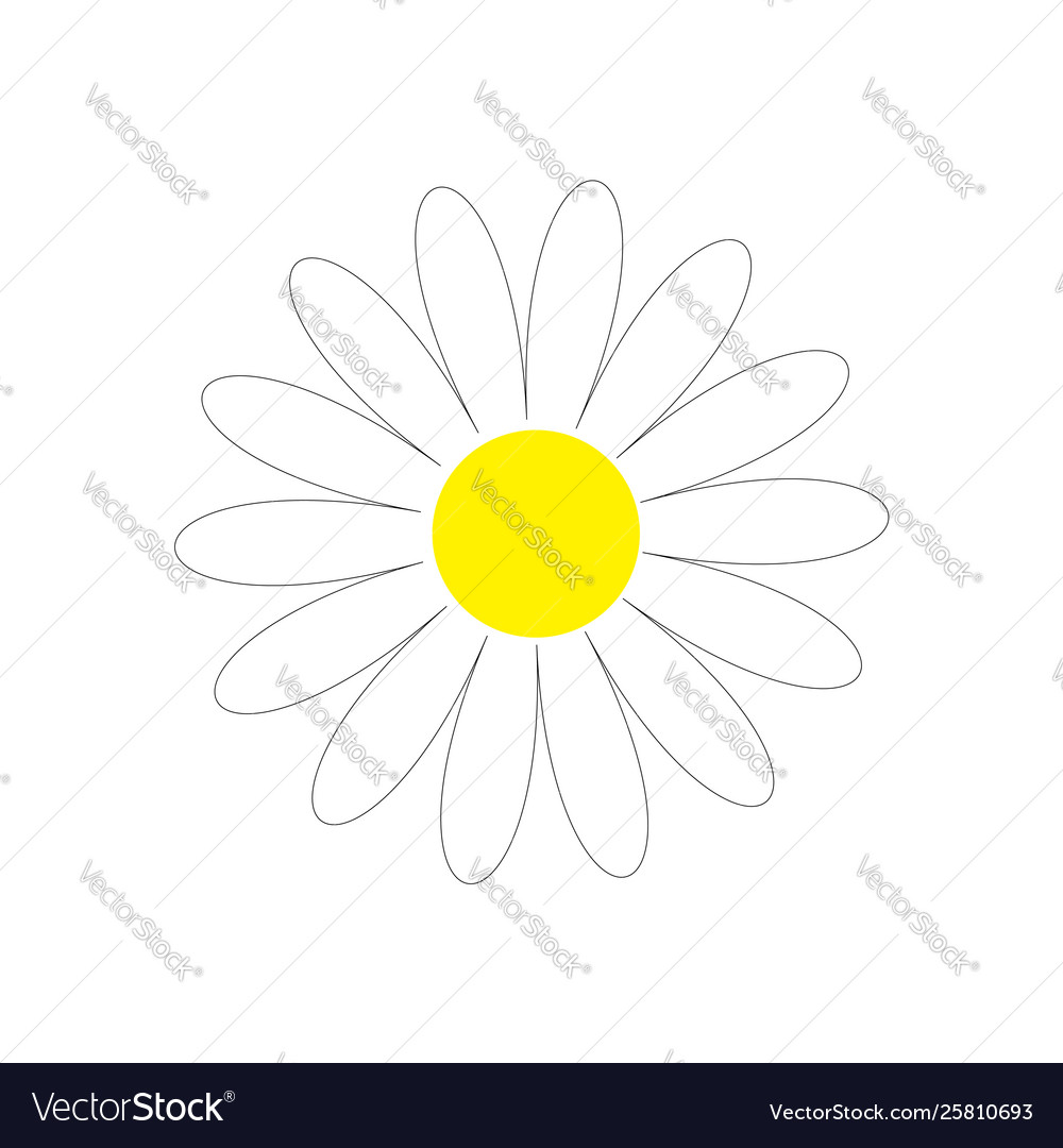 Daisy chamomile cute flower plant collection love