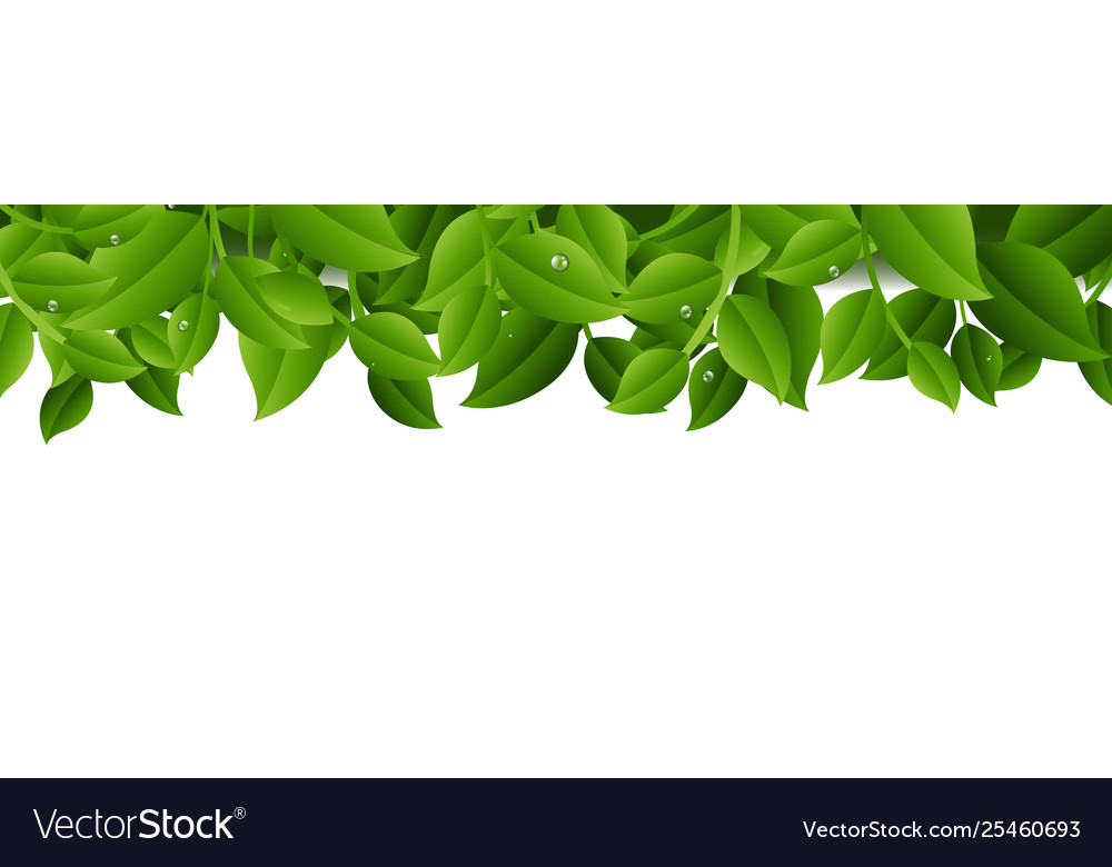 Tree branches isolated transparent background