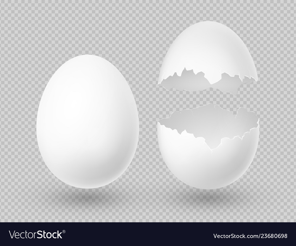 Realistic white eggs with whole and broken