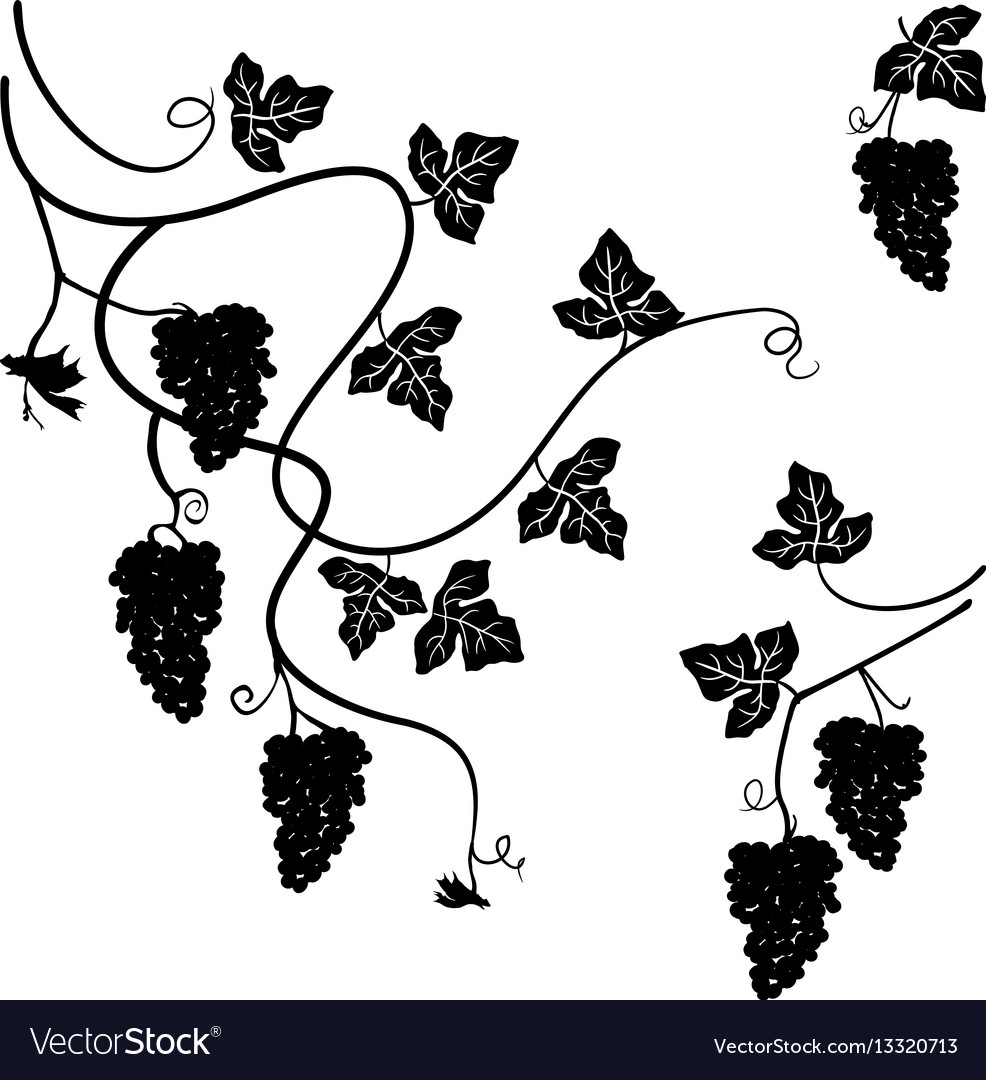 Grapes set of few decorative elements vector image