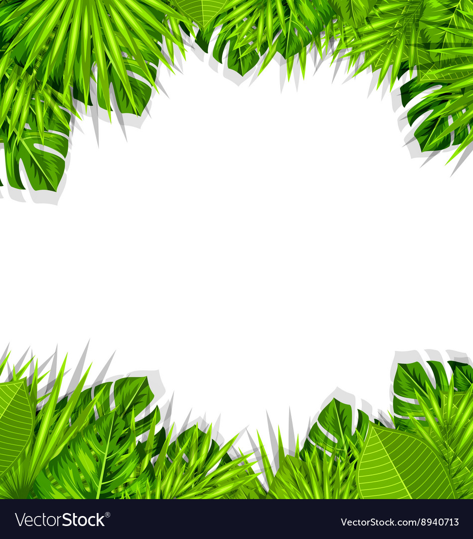 Summer Fresh Background With Tropical Leaves Vector Image ✓ free for commercial use ✓ high quality images. vectorstock