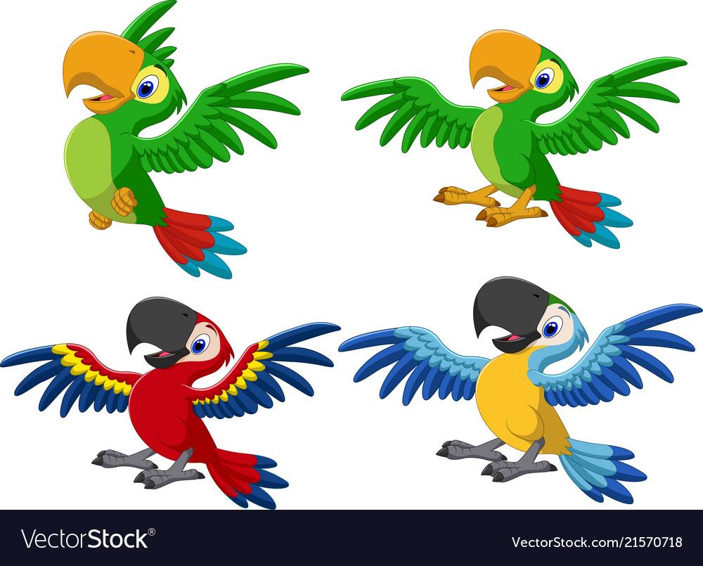 Cartoon macaw collection set
