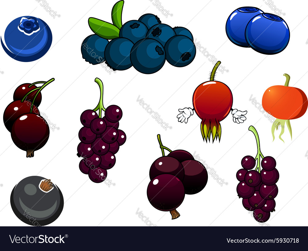 Fresh blueberries blackcurrant and briars fruits