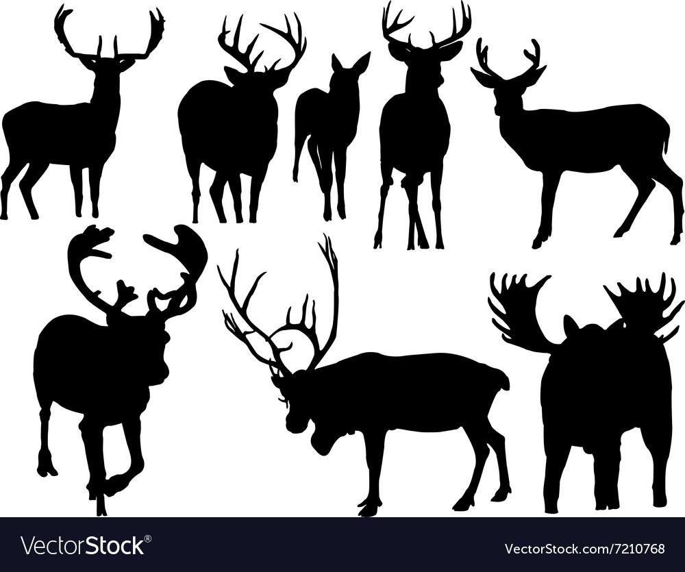 Deer vs vector image