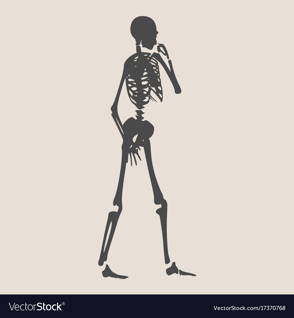 Halloween human skeleton vector image on VectorStock